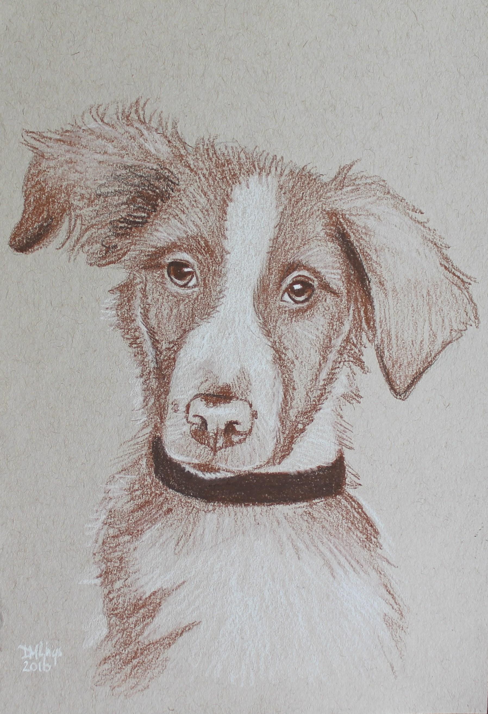 Een 30 minuten schets van je huisdier in opdracht door